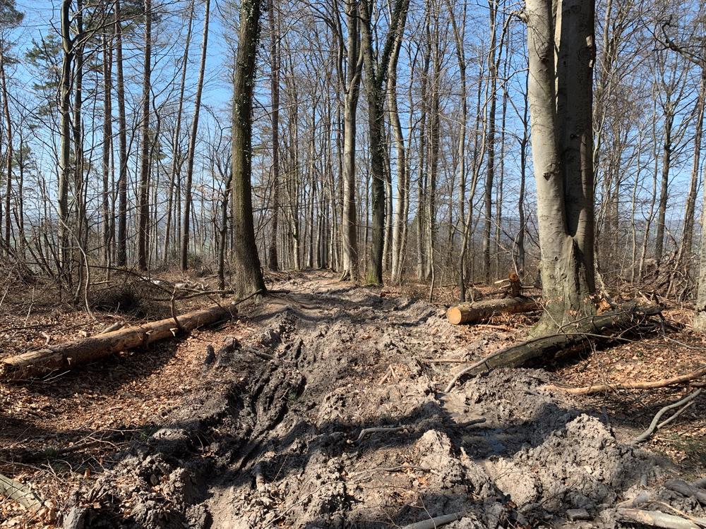 kaputte Wege wegen Holzarbeiten MTB