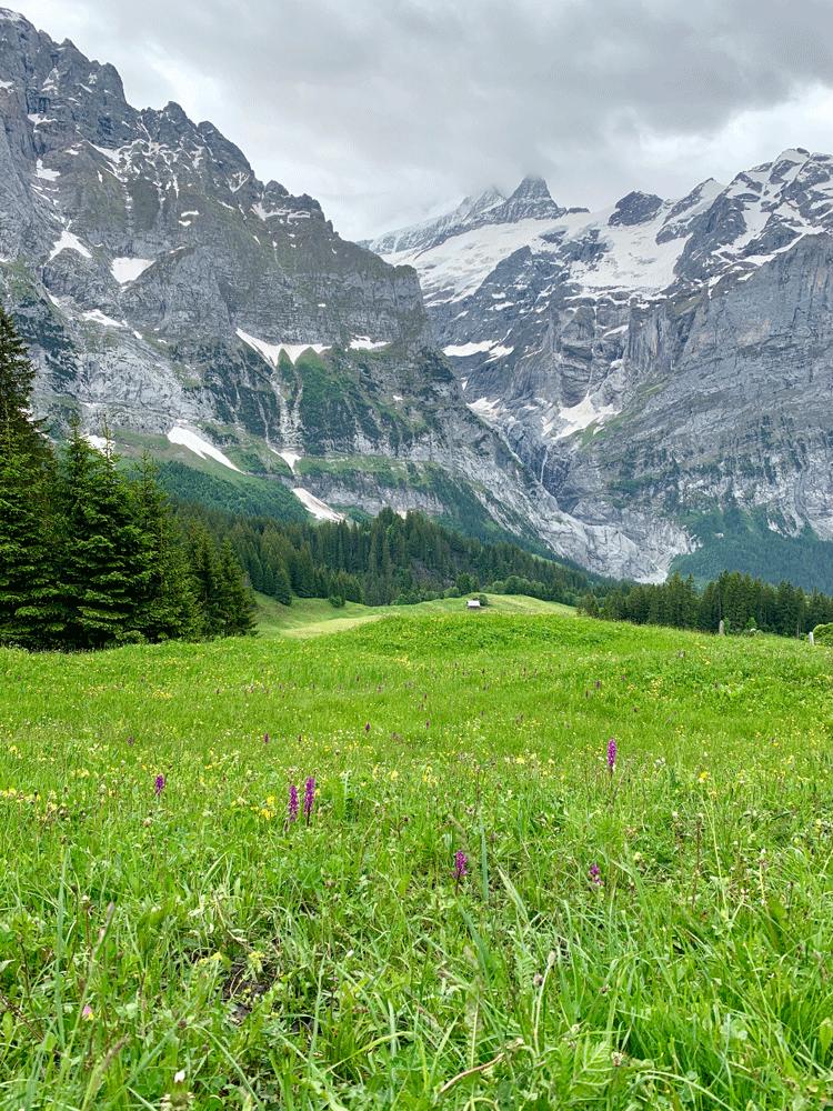 Berge und Orchidee