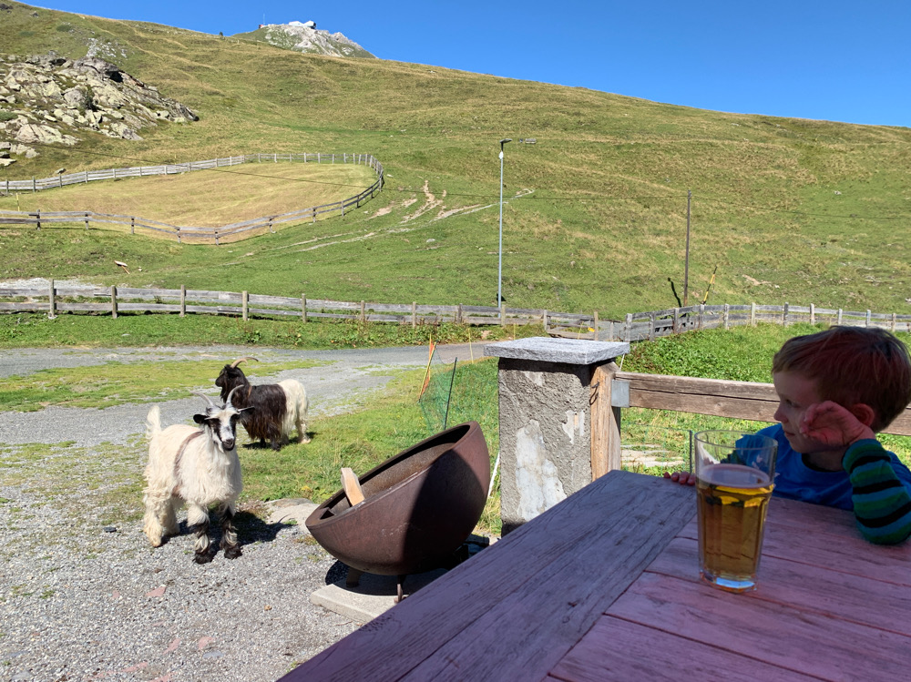 Ziegen Restaurant Alpenblick Arosa