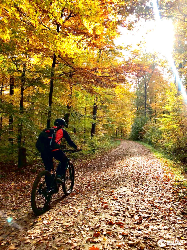 Alb-Crossing eBike Herbstwald