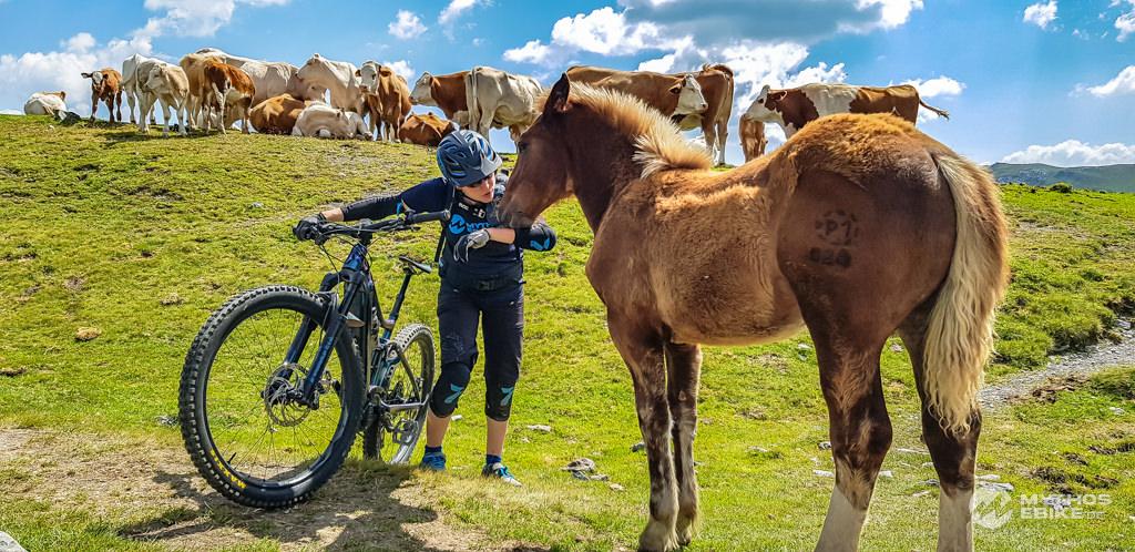 Pferd und Mountainbiker